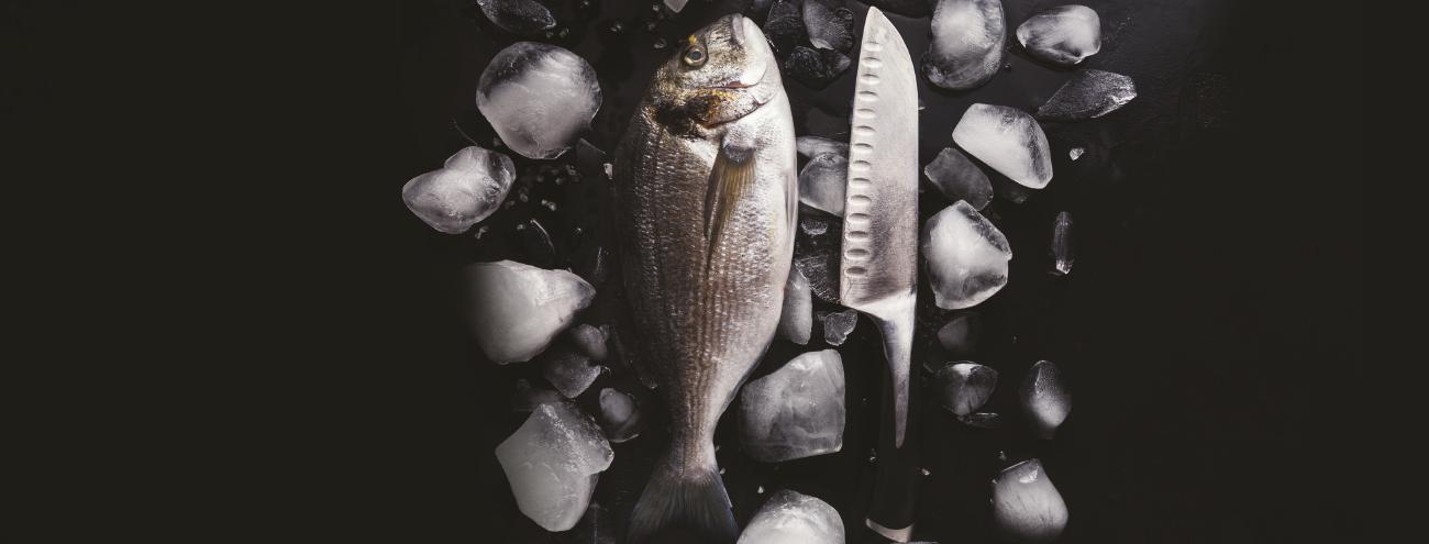 Officina dei sapori: pesce per passione