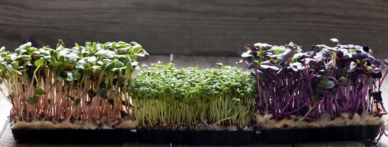Linfa Pro: la serra 2.0 in ristorazione